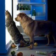 Top 20 Foods You Should NOT Feed Your Pets