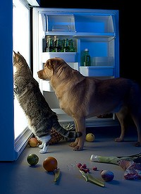 dog-cat-fridge-200x0