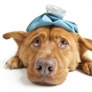 Top 10 Most Common Medical Conditions reported in cats & dogs