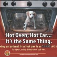 It's summer!  Please don't leave your dog in your car!
