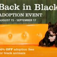 Back in Black – August 15th-Sept 17th 2011