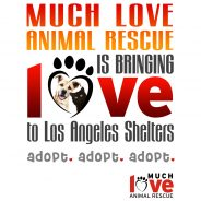 MLAR Is Bringing Love to LA Shelters starting 5/12/12