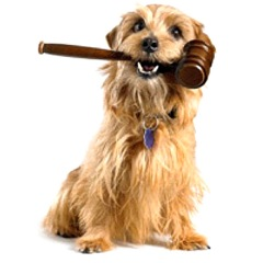 MUCH-LOVE-dog-holds-gavel