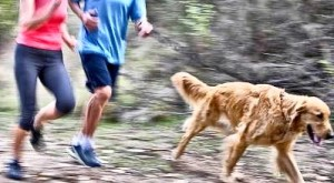 exercise-with-dog