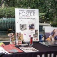 Makeover for Mutts Highlights Much Love's Foster Program