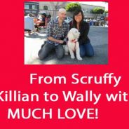 From Scruffy Killian to Much Love-d Wally