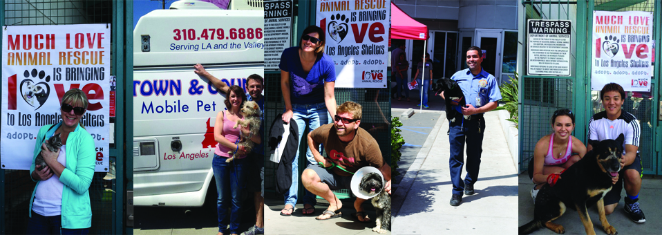 Much Love West LA Shelter Takeover Report: 26 Dogs and 10 Cats Adopted!