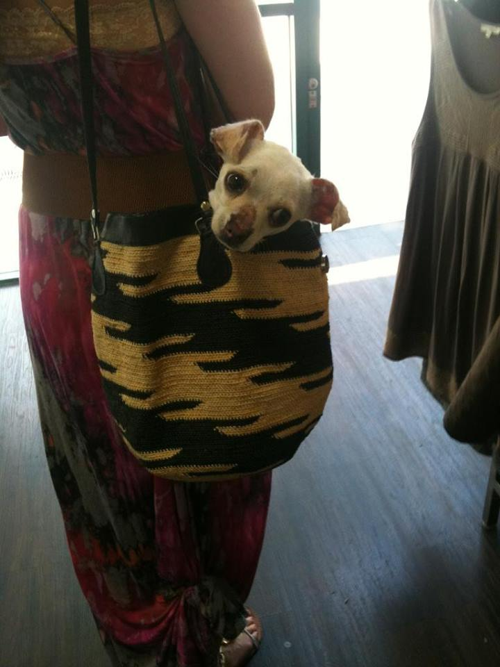 Aero's got it in the bag!