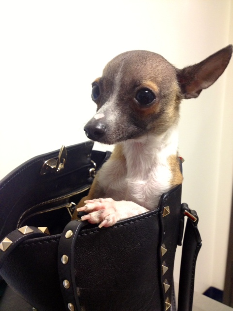 Purse Possum