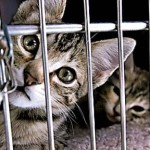 From The Best Friend's Blog: The Holy Grail of Spay/Neuter