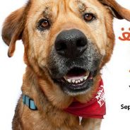 Join Much Love's Dog Pack for Strut Your Mutt 2013!!