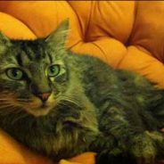 Jasper Is Our Cat Of The Month For The Dog Days Of August!