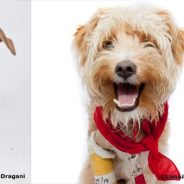Lisa Dragani Photography Offer To All Much Love Adopters