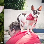 Hugable Hubcap is Our Dog of the Month!