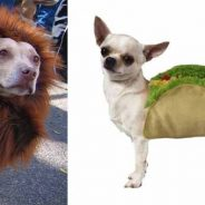 Have a Happy Howloween at Bubbles, Barks, and Brews This Sunday!