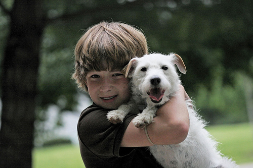 teach your children well foster an animal for much love