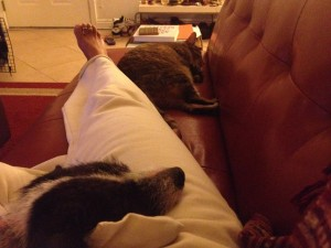 Chapeau relaxes with her foster mom and new kitty pal!