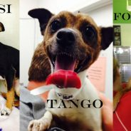 Watusi Tango Foxtrot? This is No April Fool's Joke: Much Love Just Got a SLEW of New Dogs!