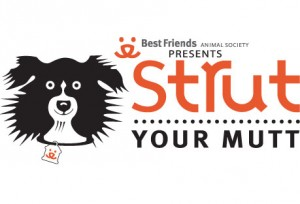 strut-your-mutt