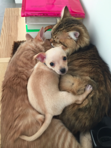 Max loves to cuddle with kitties